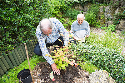 Two senior men in garden - p1026m1164167 by Patrick Frost