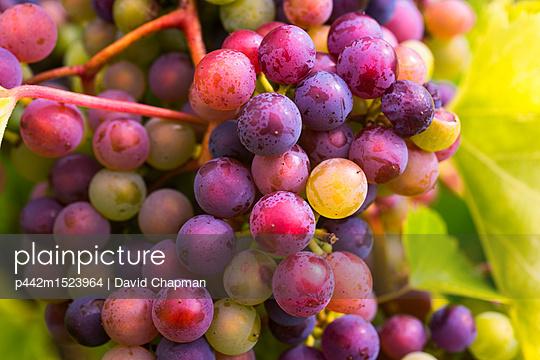 p442m1523964 von David Chapman