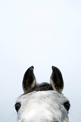 Horse close-up - p4060560 by clack