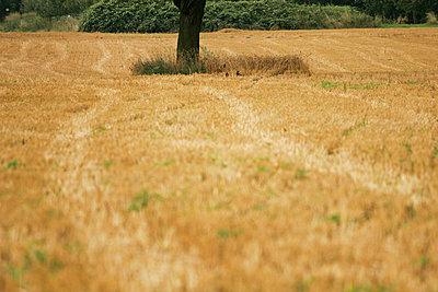 Agrar - p4170025 von Pat Meise