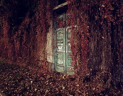 Zugewachsenes Haus - p9450060 von aurelia frey