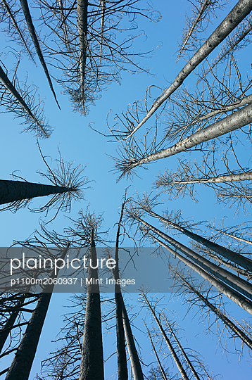 p1100m2060937 von Mint Images