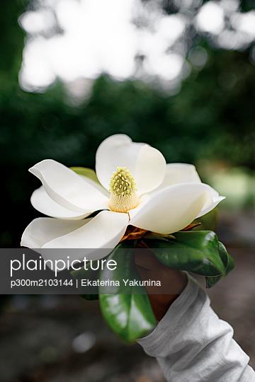 Boy's hand holding white Magnolia blossom - p300m2103144 by Ekaterina Yakunina