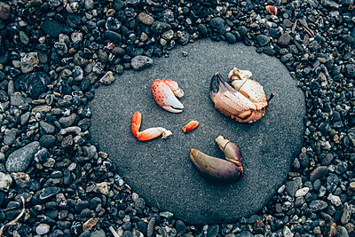 Crab Legs on Shore - p1262m1063984 by Maryanne Gobble