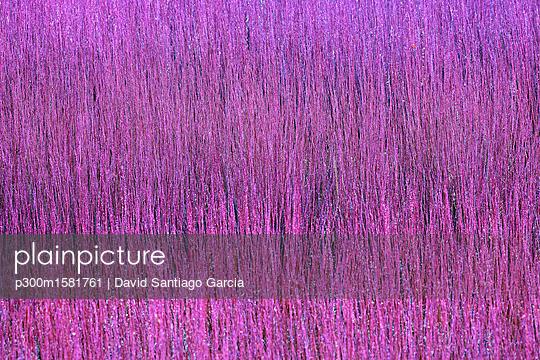 Spain, Wicker cultivation in Canamares in autumn - p300m1581761 von David Santiago Garcia