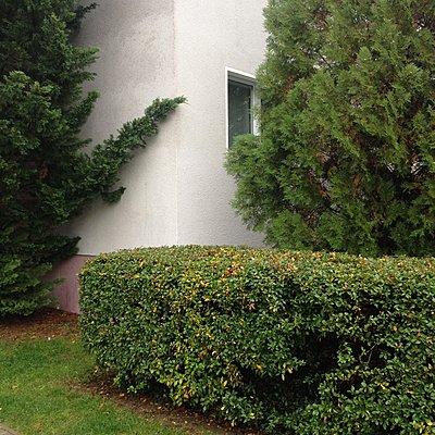 Hecke vor einem Einfamilienhaus, Leipzig, Deutschland - p1401m2172403 von Jens Goldbeck