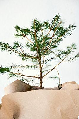 Kleiner Weihnachtsbaum - p879m1556386 von nico