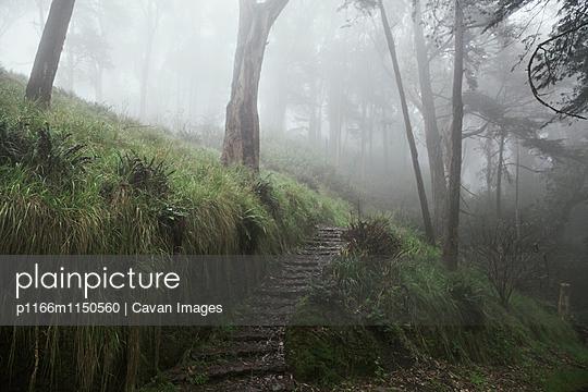 p1166m1150560 von Cavan Images