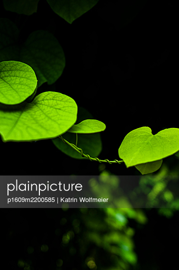 p1609m2200585 by Katrin Wolfmeier