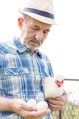 Farmer on organic farm holding chicken and eggs - p300m998344f by Milton Brown