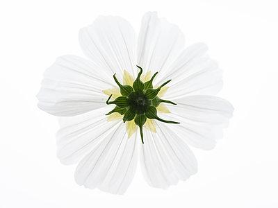 Cosmic flowers underside - p401m2037635 by Frank Baquet