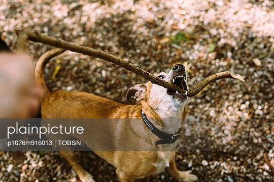 PET - p1076m916013 by TOBSN