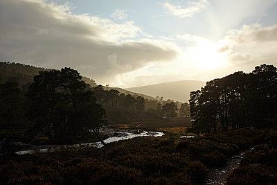 Wald im Cairngorm Nationalpark, Schottland - p1145m1558736 von Kerstin Lakeberg
