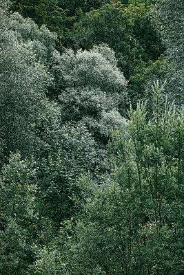Frisches Grün - p728m1585119 von Peter Nitsch