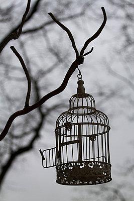 Birdcage - p7390365 by Baertels