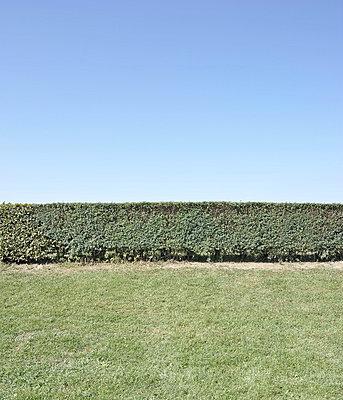 Bush - p9111527 by Gaëtan Rossier