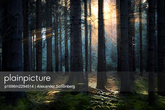 Mystical forest - p1696m2294514 by Alexander Schönberg