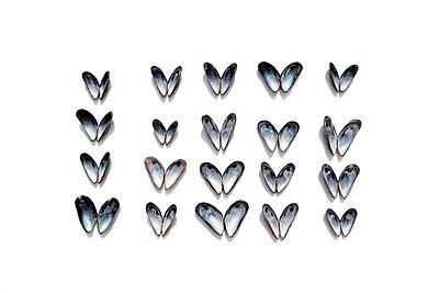 Butterfly effect - p258m1424697 by Katarzyna Sonnewend