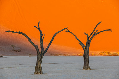 Africa, Namibia, Namib-Naukluft National Park, Deadvlei, dead acacia trees in clay pan - p300m2023814 by Fotofeeling