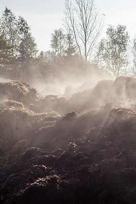Steaming dunghill - p739m949515 by Baertels