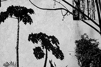 Shadow of tree on a wall - p1484m2150257 by Céline Nieszawer