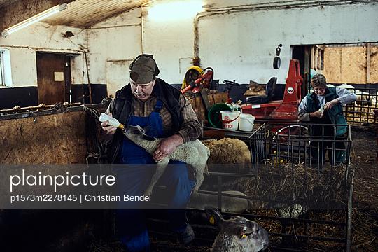 Farmer feeding a young lamb - p1573m2278145 by Christian Bendel