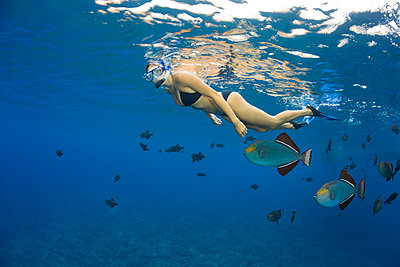 A young woman free diving with black triggerfish (Melichthys niger), Molokini Marine Preserve off the island of Maui; Maui, Hawaii, United States of America - p442m2032326 by Dave Fleetham