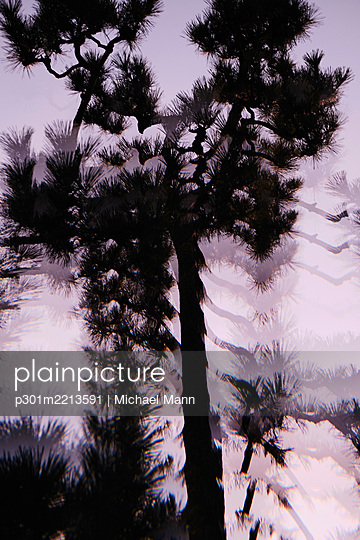 Multiple exposure silhouetted tree against purple sky - p301m2213591 by Michael Mann