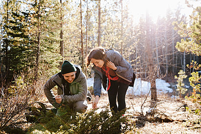 Couple looking at plants, hiking in sunny woods - p1192m2094019 by Hero Images