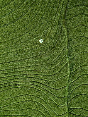 A parasol in a field, aerial view - p1108m2141973 by trubavin
