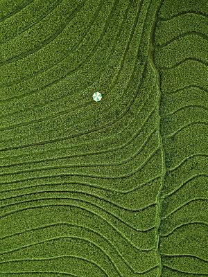 Ein Sonnenschirm im Feld, Luftaufnahme - p1108m2141973 von trubavin