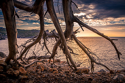 Spain, Mallorca, Port de Soller, Driftwood on seashore - p352m1350000 by Lasse Eklöf