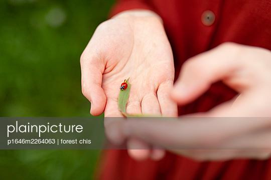 Palm with ladybug - p1646m2264063 by Slava Chistyakov