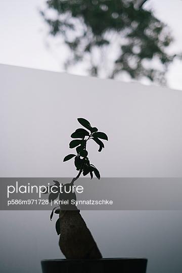 Pflanze in einem Blumentopf - p586m971728 von Kniel Synnatzschke