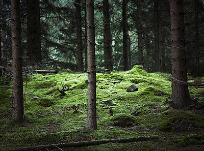 Gloomy forest - p312m992885f by Matilda Lindeblad
