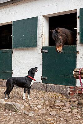 Horse and dog - p781m944392 by Angela Franke