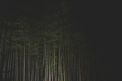Illuminated bamboo grove at night in Arashiyama, Kyoto Japan - p798m1007811 by Florian Löbermann