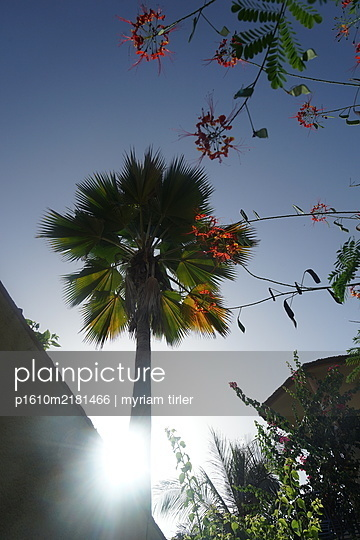 Palm tree in blue sky - p1610m2181466 by myriam tirler