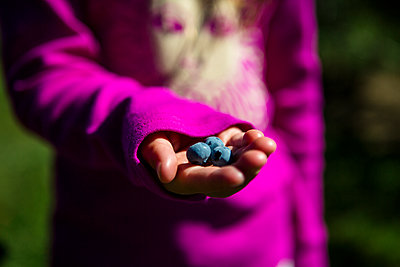Midsection of girl holding blueberries while standing at farm during sunny day - p1166m2066115 by Cavan Social
