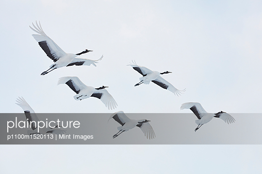 p1100m1520113 von Mint Images