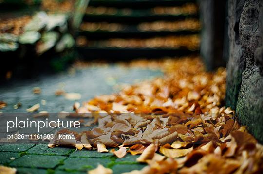 Herbstlaub - p1326m1161883 von kemai