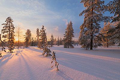 The lights of the arctic sunset illuminate the snowy woods, Vennivaara, Rovaniemi, Lapland region, Finland, Europe - p871m1448418 by Roberto Moiola