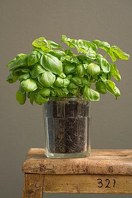 Frischer grüner Basilikum in ein Glas gepflanzt auf einem Holzhocker vor brauner Wand. - p948m2134096 von Sibylle Pietrek