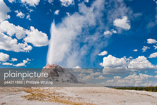 The White Dome Geyser Erupting - p44211892 by Philippe Widling