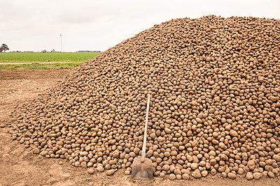 Kartoffeln - p1222m1072124 von Jérome Gerull