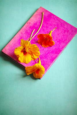 Nasturtium Stems on Pink Journal - p1248m1492073 by miguel sobreira