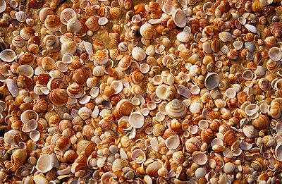 Muscheln am Strand - p2200196 von Kai Jabs