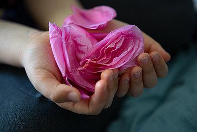 Tender blossom - p454m2192410 by Lubitz + Dorner