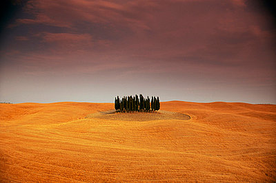 Cypress trees in Tuscan field, Val d'Orcia, Siena province, Tuscany, Italy - p8711806 by Sergio Pitamitz