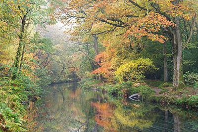 Mist and autumnal colours beside the River Teign near Fingle Bridge, Dartmoor, Devon, England, United Kingdom, Europe - p871m1118652 by Adam Burton
